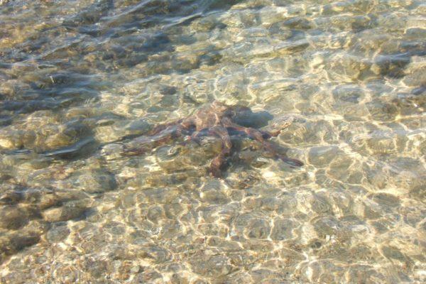 Montebello21 ✓ Spiaggia di Monte Fico a Caprera nell'Arcipelago di La Maddalena